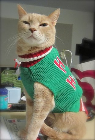 These 26 Cats Wearing Christmas Sweaters Will Put A Smile On Your Face image Cat In Ho Ho Ho Christmas Sweater 406x600
