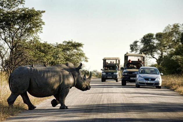 A rhinoceros crosses a road inside Kruger National Park, some 60 km from Nelspruit in eastern South Africa, on June 13, 2010