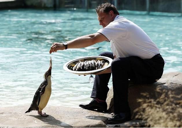 Animals receive silver service at London Zoo