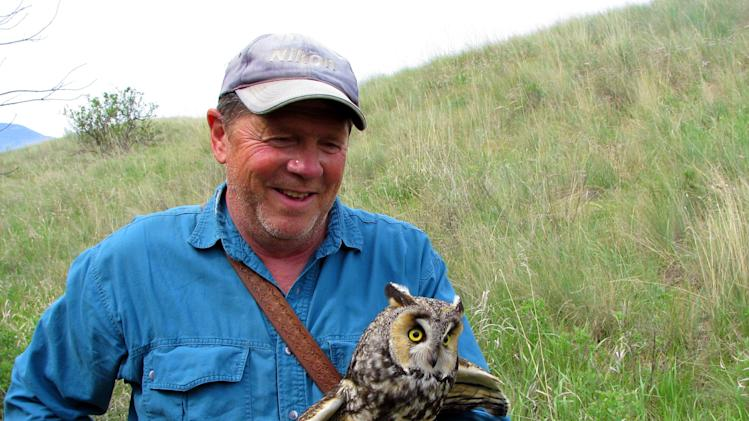 "This image provided by Explore.org shows Denver Holt of the Owl Institute tagging a long-eared owl outside Missoula, Mont. Holt has been studying the long-eared owl for 27 years. He's banded over 1,700 of the birds and found 225 nests in a 90-mile stretch through Montana. But he's never been able to see what the nocturnal birds do at night _ until now. An infrared camera on top of a pole in willow thickets on Montana rangeland has been aimed at a long-eared owl nest. The long-eared owl cam is part of explore.org's ""Pearls of the Planet"" Internet initiative. (AP Photo/Explore.org, Christina Nealson)"