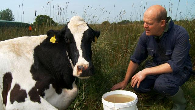 'Moo Man' Celebrates Cow Whisperer