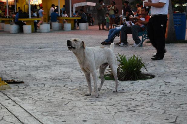 Historically, dogs were really bred for their meat by the Aztecs. For hundreds of years, eating dog meat has been a staple of the culinary culture of the Americas. In some parts of the country the pra