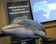 A model of a dolphin at the launch of a campaign by Singapore animal welfare group ACRES in May 2011 to urge Resorts World Sentosa (RWS) casino to free 25 dolphins destined for a new marine park attraction. The first batch of dolphins has arrived at a new oceanarium in Singapore after activists failed to have the animals' transfer from the Philippines blocked, officials said Tuesday