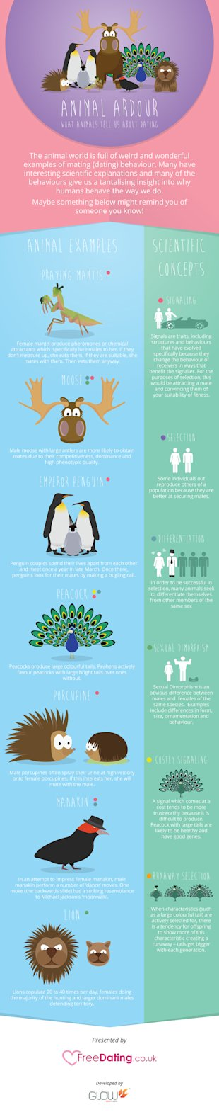 What Animals Tell Us About Dating [Infographic] image animals b2c