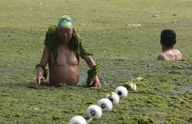 Swimmers did not need any encouragement to get in amongst the algae. (Reuters)