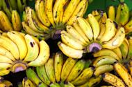 Going bananas: This yellow fruit is an essential part for the offering in Hindu rituals. (