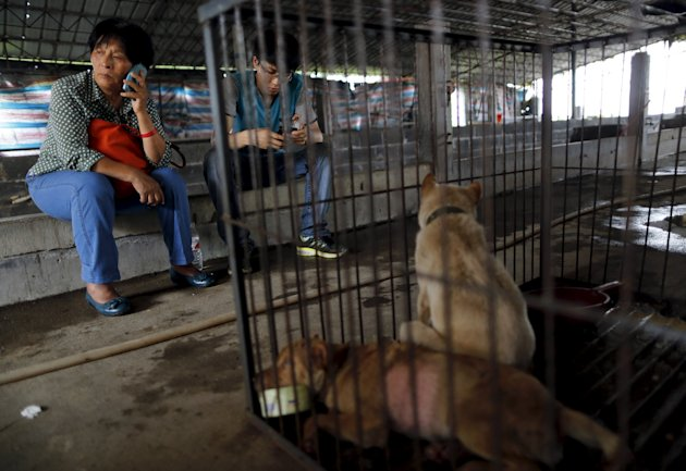 Animal lover Yang Xiaoyun (L) uses a mobile phone next to a cage accommodating dogs which she purchased from dog vendors to rescue them from dog meat dealers in Yulin on June 21, 2015. REUTERS/Kim Kyung-Hoon