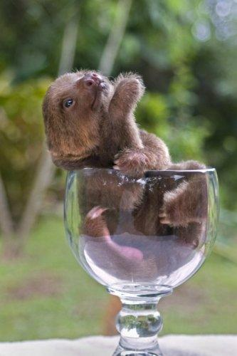 6. Sloth-in-a-Glass