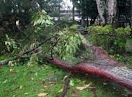 A tree is blown down by Cyclone Evan in Suva, Fiji, on December 17, 2012. The information ministry said bridges were submerged by swollen rivers, high winds toppled power lines and roads were closed by landslides and debris.