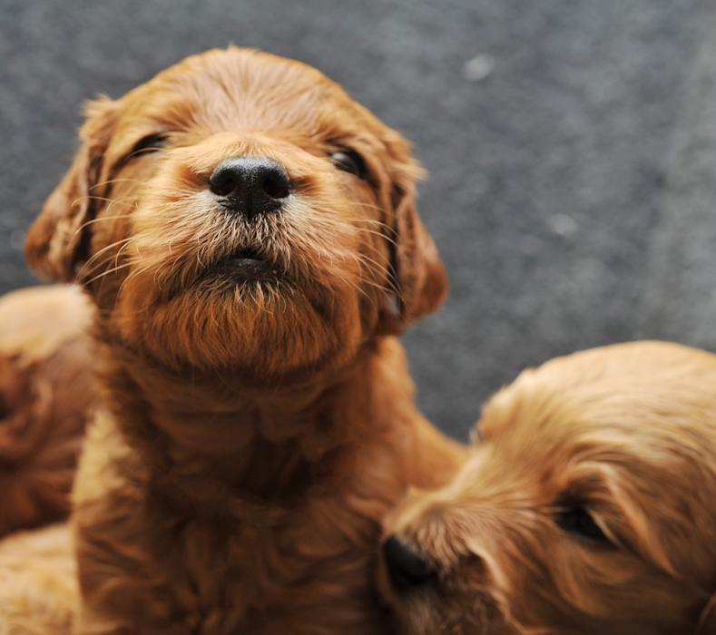Newborn Puppies: Adorable Look at Dogs in First Weeks of Life
