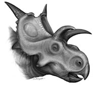 Xenoceratops, a newly discovered Cretaceous-era dinosaur,likely grazed on cattails and ferns in a primeval forest in what is now Canada.