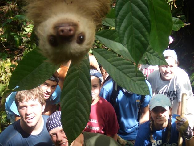 A sloth gatecrashes a groups holiday snap in the jungle. The group of youngsters on an International Student Volunteers expedition from all over the world had been helping cut paths in the dense woodl