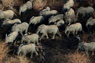An aerial picture taken earlier this month shows the main herd of elephants in Zakouma National Park in Chad. The park has lost 90 percent of its elephants in the last 10 years