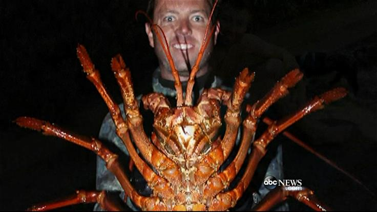 Man Has Change of Heart After Catching Nearly 12 Lb Lobster