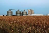 A field of dead corn sits next to an ethanol plant July 25, in Palestine, Illinois. The drought in America's breadbasket is intensifying at an unprecedented rate, experts warned, driving concern food prices could soar if crops in the world's key producer are decimated