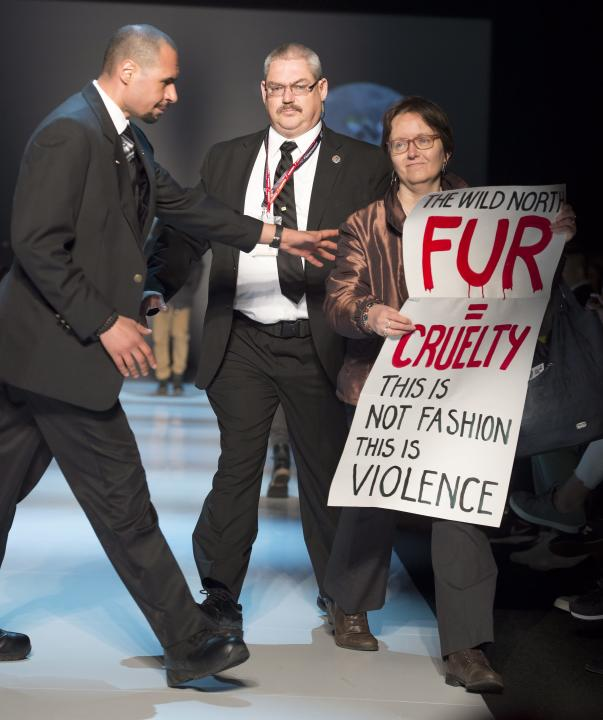 Security guards grab a protester on the runway during the The Wild North show, part of Toronto fashion week in Toronto on Friday, March 27, 2015.  (AP Photo/The Canadian Press, Frank Gunn)