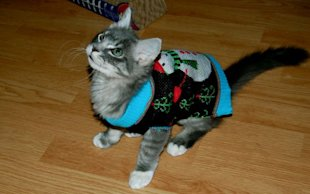 These 26 Cats Wearing Christmas Sweaters Will Put A Smile On Your Face image Cat In Snowman Christmas Sweater