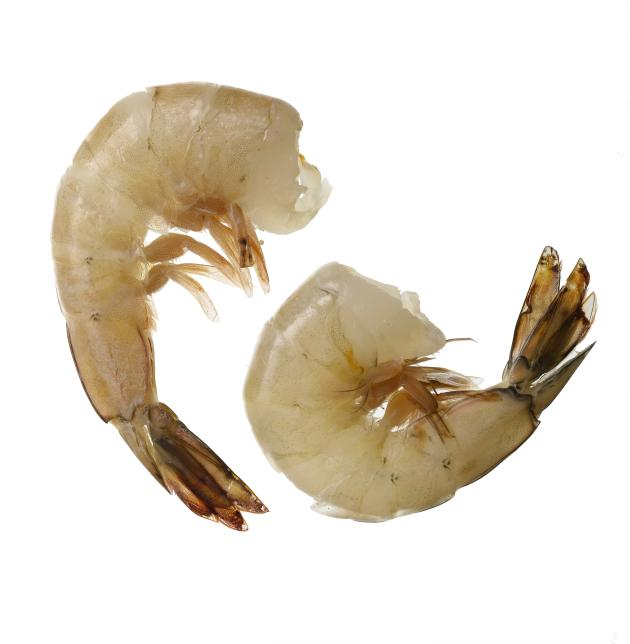 Avoid: Imported Shrimp