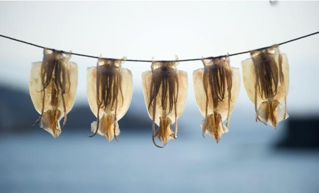 Drying out squid in Japan