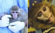 Iran Space Monkey Photos Prompt Questions