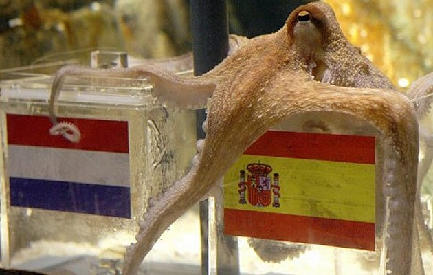 Is there a successor to Paul the Octopus at Euro 2012? (AFP)