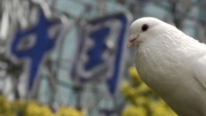 """A dove rests on a tree near a Chinese sign read as """"China"""" at a park on Monday, April 1, 2013 in Shanghai, China. Two Shanghai men have died from a lesser-known type of bird flu in the first known human deaths from the strain, and Chinese authorities said Sunday it wasn't clear how they were infected but there was no evidence of human-to-human transmission. (AP Photo/Eugene Hoshiko)"""