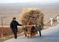 File photo shows a farmer pulling an ox-cart on a road to Pyongyang in 2003. North Korea is suffering a prolonged and widespread drought, state media says, raising fears it will worsen already dire food shortages in the impoverished communist country