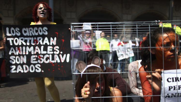 Activists take part during a demonstration against of the use of animals in circus shows, at Zocalo Square in Mexico City