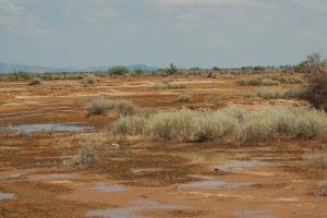 Climate Change May Radically Transform Desert Bacteria