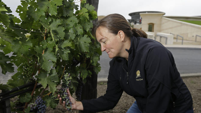 In this photo taken Friday, July 26, 2013, assistant winemaker and viticulturist Nathalie Jure Buckland looks at veraison, the onset of ripening, taking place on Cabernet Sauvignon grapes at Opus One winery in Oakville, Calif. One thing that is certain about the weather in California's premiere wine grape-growing region is that there is no such thing as normal, and 2013 is living up to that adage. After dealing with cool temperatures in three of the past four years that slowed ripening and kept grapes hanging on the vine until the fall rainy season threated, growers in Napa Valley are dealing with an opposite challenge. (AP Photo/Eric Risberg)
