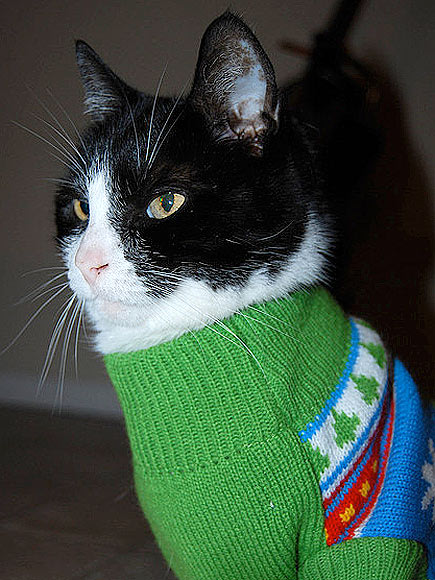 Awesome-Cat-In-Christmas-Sweater jpgCats In Christmas Sweaters