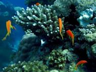 A coral reefs close to the Saudi Red Sea city of Jeddah. More than 2,600 of the world's top marine scientists have warned that coral reefs around the world are in rapid decline and urged immediate global action on climate change to save what remains