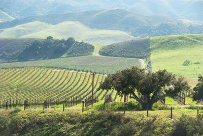 Why Harvard owns 10,000 acres of California vineyards