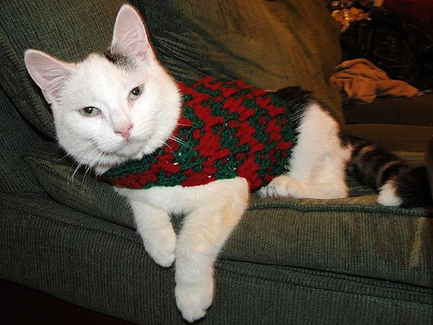 These 26 Cats Wearing Christmas Sweaters Will Put A Smile On Your Face image Cat Laying Around In Christmas Sweater