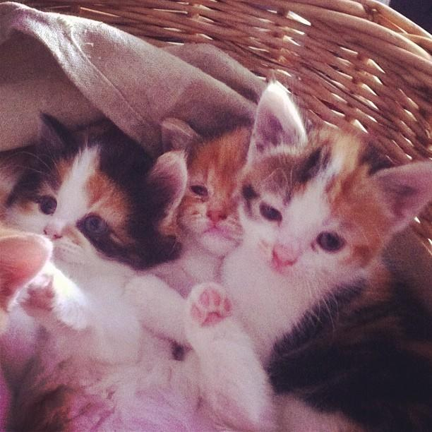 1. Basket! Of! Kitties!