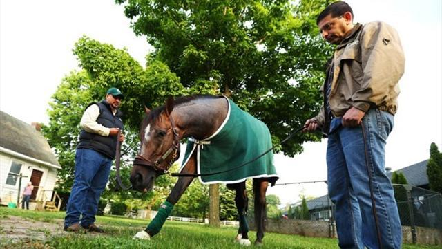 Horse Racing - Oxbow warned not to race again in 2013
