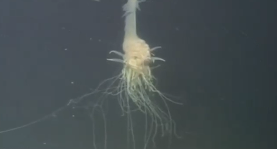 Thumbnail for Watch: Flying Spaghetti Monster Discovered At The Bottom Of The Ocean