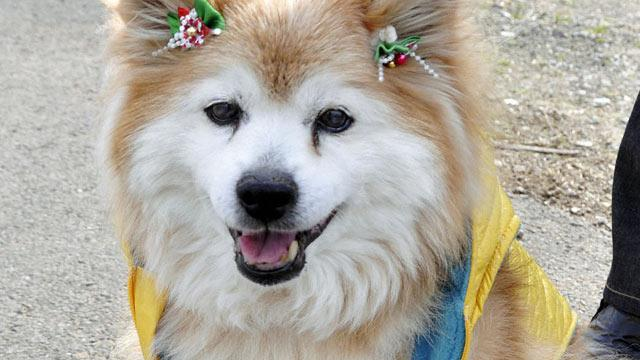 World's Oldest Dog Dies at Age 26