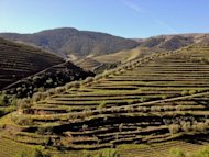 Terraced vinyards in Portugal's Douro wine region. Starting near the remote border with Spain and cascading downriver to the sea at Porto, the historic port-producing valley is home to dozens of large quintas and more than 31,000 small growers