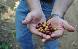 5 Reasons Why Starbucks' Pinterest Strategy is Not A Big Hit image Coffee Farmers