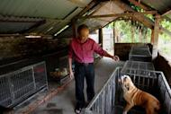 Nguyen Bao Sinh, owner of Hanoi's first private all-service hotel for pets, walk amongst pet cages at his pet hotel in Hanoi. For him, Vietnam needs to move away from its traditional love of canine meat and learn from other pet-loving cultures