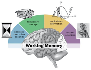 "Why ""Simple"" Websites Are Scientifically Better image working memory 2 1"