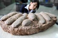 File photo shows dinosaur eggs on display at a natural science museum in China. The fact that land-bound dinosaurs laid eggs is what sealed their fate of mass extinction millions of years ago while live birthing mammals went on to thrive, scientists said Wednesday