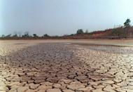 A dried out lagoon in Brazil in 1998. Severe drought gripping northeastern Brazil -- the worst in a half-century -- is taking its toll on more than 1,100 towns, even triggering fighting in rural areas, local media reported Sunday