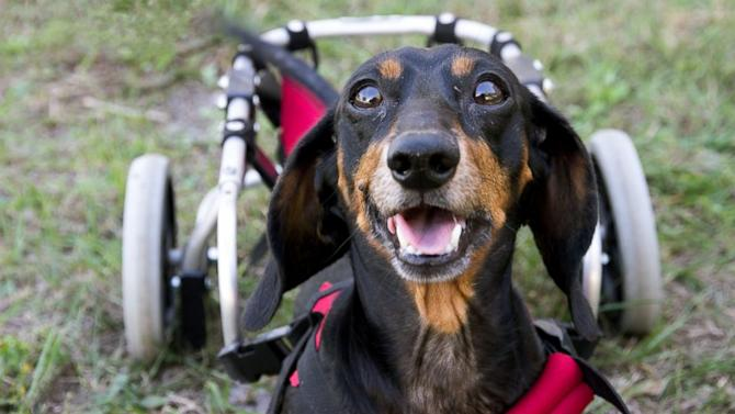 Rescued Paralyzed Dog Helps Autistic Kids