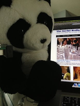 How to Google Proof Your Website in Six Steps image Google Panda
