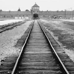 Walking in Auschwitz, Amid the Weeds and Memories