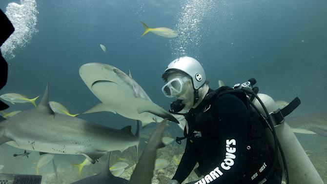 """Shark expert Chang Sein Chin of Stuart Cove's Dive Bahamas demonstrates how to feed Caribbean reef sharks to """"Late Late Show"""" host Craig Ferguson in Nassau, Bahamas as seen on """"Shark Bites: Adventures in Shark Week."""""""