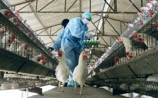 WHO statistics show that, worldwide, 357 people have been killed by bird flu since 2003