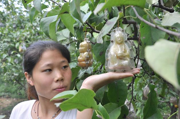 Look out for baby shaped pears in shops soon as Hao Xianzhang plans to bring these uniquely shaped fruit to our shores. The farmer in the northern province of Hebei, China, started to grow baby shaped